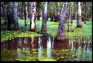 ルイジアナ州ハニー・アイランド沼